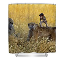 Baboons In Botswana Shower Curtain
