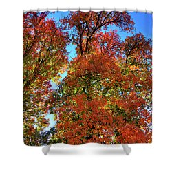 Shower Curtain featuring the photograph Backlit Autumn by David Patterson