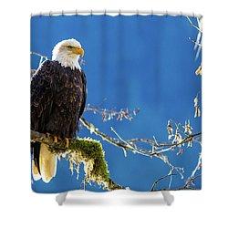 Backlit Bald Eagle In Squamish Shower Curtain
