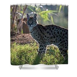 Backlit Serval Shower Curtain