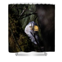 Bald Eagle Behind Tree Shower Curtain