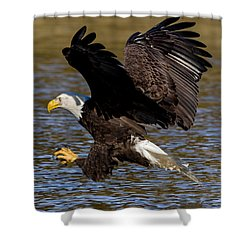 Shower Curtain featuring the photograph Bald Eagle Fishing On The James River by Lori Coleman
