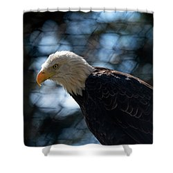 Bald Eagle Grandfather Mountain Shower Curtain