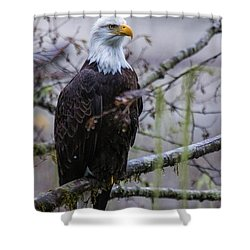 Bald Eagle In Rain Forest Shower Curtain
