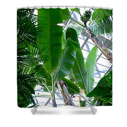 Banana Leaves In The Greenhouse Shower Curtain