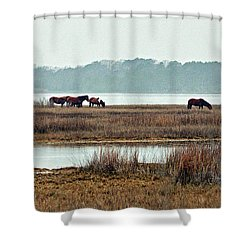 Shower Curtain featuring the photograph Band Of Wild Horses At Sinepuxent Bay by Bill Swartwout Fine Art Photography
