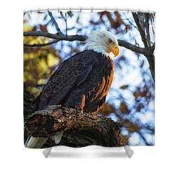 Shower Curtain featuring the photograph Bandit by Lori Coleman
