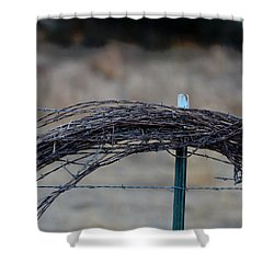 Barbed Wire   New Strands Old Roll Shower Curtain
