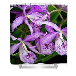 Bc Maikai 'louise' Orchid Shower Curtain