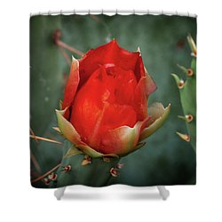Shower Curtain featuring the photograph Be My Valentine by Rick Furmanek