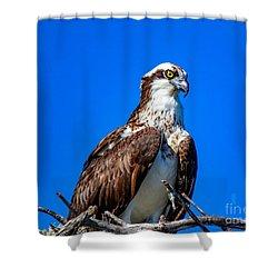 Beautiful Osprey Shower Curtain