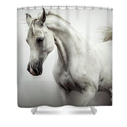 Shower Curtain featuring the photograph Beautiful White Horse On The White Background by Dimitar Hristov