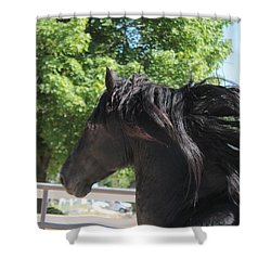 Beauty In Motion Shower Curtain