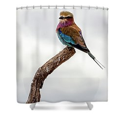 Shower Curtain featuring the photograph Beauty With Wings, The Lilac Breasted Roller by Kay Brewer