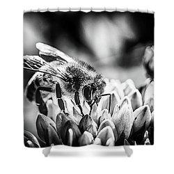 Bee Bee Shower Curtain