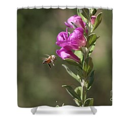 Bee Flying Towards Ultra Violet Texas Ranger Flower Shower Curtain