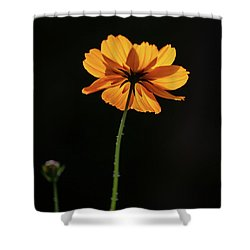 Shower Curtain featuring the photograph Behind Light And Shadow by Dale Kincaid