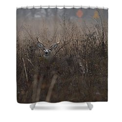 Big Buck Shower Curtain