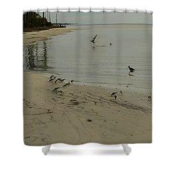 Birds On Beach Shower Curtain