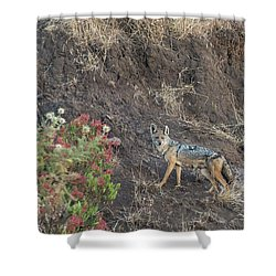Shower Curtain featuring the photograph Black Backed Jackal by Alex Lapidus