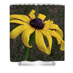 Shower Curtain featuring the photograph Black Eyed Susan by Dale Kincaid