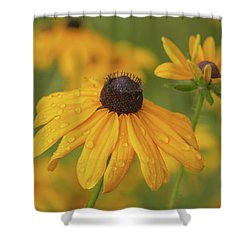 Shower Curtain featuring the photograph Black-eyed Susans by Dale Kincaid