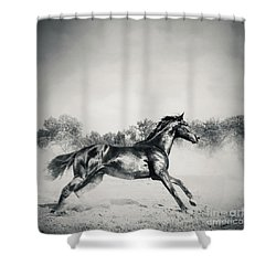 Shower Curtain featuring the photograph Black Stallion Horse by Dimitar Hristov