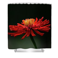 Shower Curtain featuring the photograph Blazing Red by Dale Kincaid