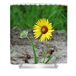 Bloom And Waiting Shower Curtain