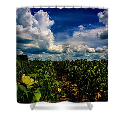 Blooming Cotton  Shower Curtain