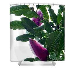 Blossoming Magnolias Shower Curtain