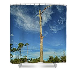 Blue Skies And Broken Branches Shower Curtain