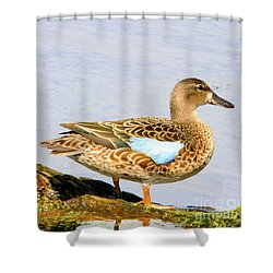 Blue-winged Teal Female Duck Shower Curtain