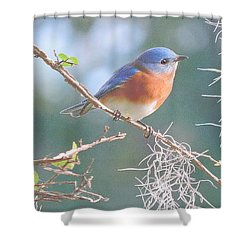 Bluebird In Dixie  Shower Curtain