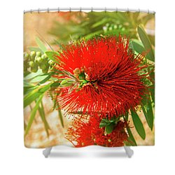 Bottlebrush Bloom Shower Curtain