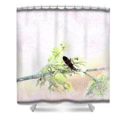 Boxelder Bug In Morning Haze Shower Curtain