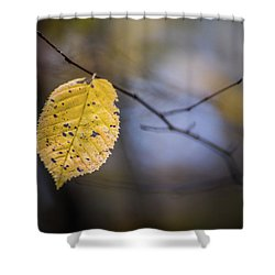 Shower Curtain featuring the photograph Bright Fall Leaf 1 by Michael Arend