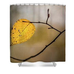 Shower Curtain featuring the photograph Bright Fall Leaf 10 by Michael Arend