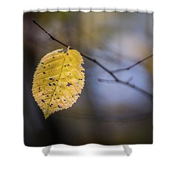 Shower Curtain featuring the photograph Bright Fall Leaf 3 by Michael Arend