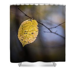 Shower Curtain featuring the photograph Bright Fall Leaf 5 by Michael Arend