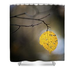 Shower Curtain featuring the photograph Bright Fall Leaf 7 by Michael Arend