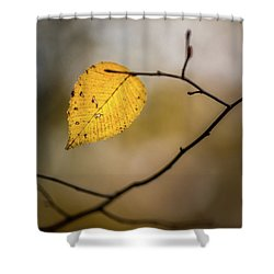 Shower Curtain featuring the photograph Bright Fall Leaf 8 by Michael Arend