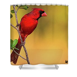 Bright Red Cardinal Shower Curtain