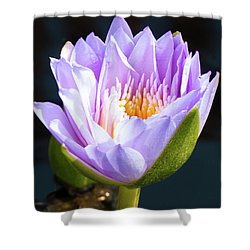 Brillance In Purple Shower Curtain