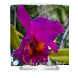 Brilliant Orchid Shower Curtain
