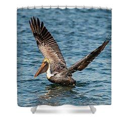 Brown Pelican Shower Curtain