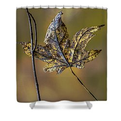 Shower Curtain featuring the photograph Buddies by Michael Arend