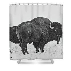 Buffalo In The Snow Shower Curtain