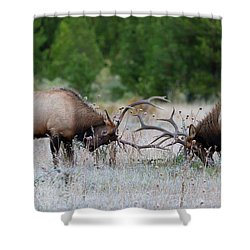 Shower Curtain featuring the photograph Bull Elk Battle Rocky Mountain National Park by Nathan Bush