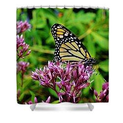Butterfly Beauty Shower Curtain